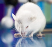 ​Primer On Rodent Handling & Identification