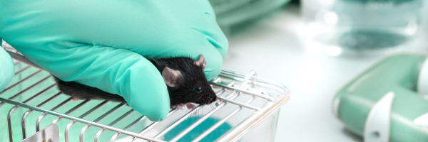 humane treatment of lab animals